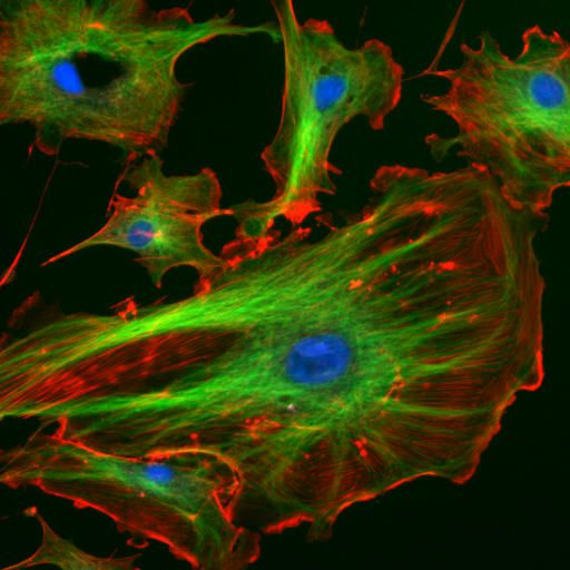 Autopoieses describes auto-self creating systems such as cells.  © NIH, public domain