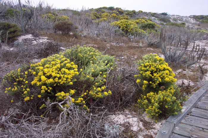 In the vegetation on this dune, phytosociology can be used to identify several distinct and revealing associations at work behind the ecological processes of its environment. © Cpt Albert E. Theberge / NOAA, public domain