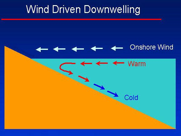 Diagram of the formation of coastal downwelling when the wind blows towards the coast. © US Army, Wikimedia public domain