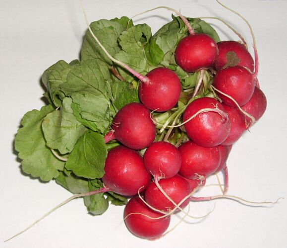 The pink radish is a very popular vegetable in summer. © DR