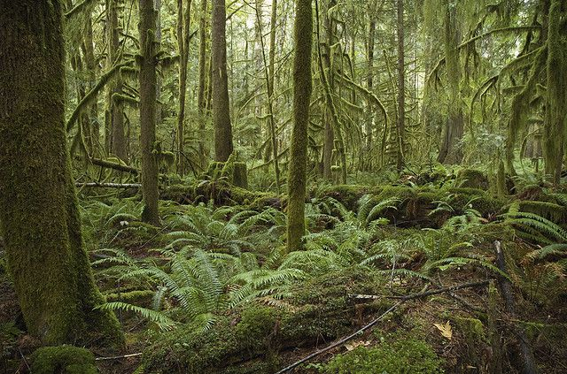 An ombrophile temperate forest in North America. © Brian Garret CC by-nd 2.0