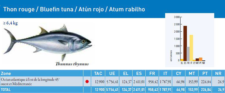 The TAC for red tuna in 2011 is 12,900 tonnes and 5,756 tonnes for the European Union. The red dot means that the stock is no longer within the biological safety limit. Despite all of that, fishing continues... © European Commission 2011