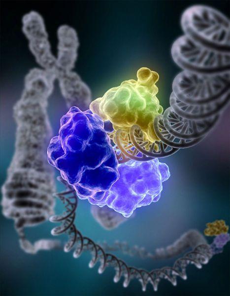 DNA ligase repairs DNA. © Courtesy of Tom Ellenberger, Washington University School of Medicine in St. Louis