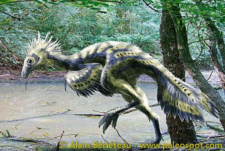 Reconstruction of Caudipteryx. The colours of its plumage are hypothetical. © Alain Bénéteau