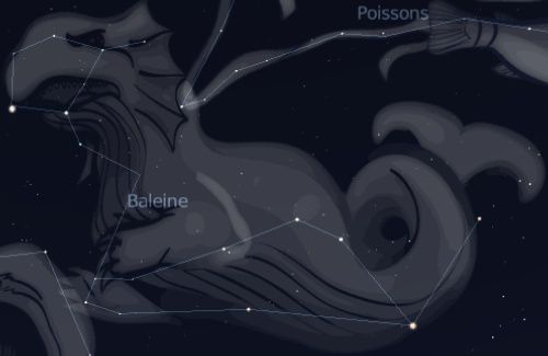 Whale constellation