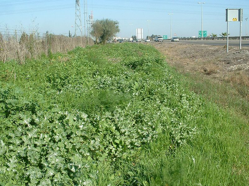 Roadside embankment covered with ruderal vegetation. © RickP, Wikimedia GFDL 1.2 CC by-sa 3.0