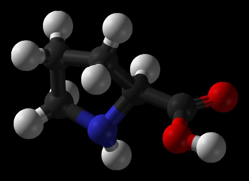 Proline has a specific structure. © Benjah-bmm27, Wikimedia, public domain