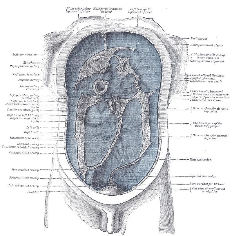 Definition > Peritonitis