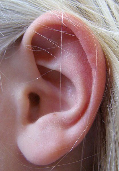 The middle ear is composed of the tympanum and the ossicles. © DR