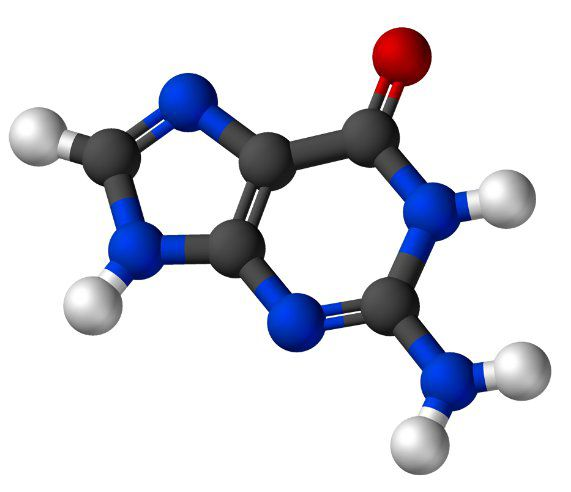 Guanine is a purine nitrogen base. © Wikimedia, public domain