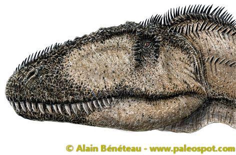 Reconstruction of the appearance of the Carcharodontosaurus. © Alain Bénéteau