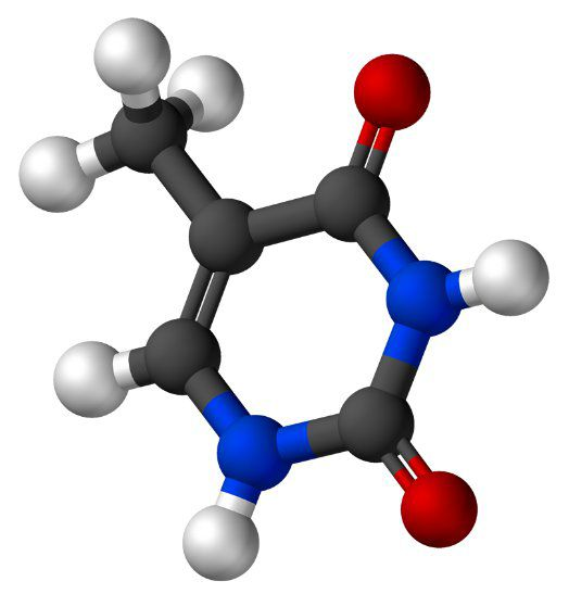 Thymine is a pyrimidine base. © Vesprcom, Wikimedia, public domain