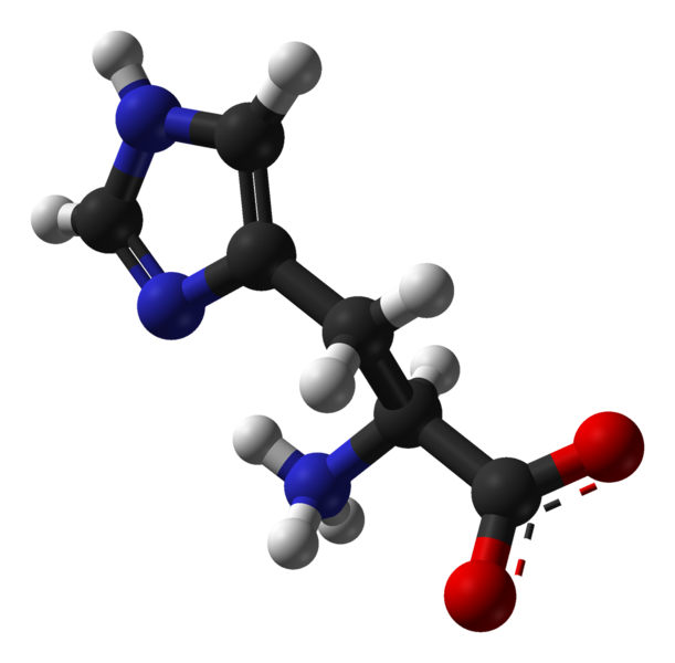Histidine is an amino acid containing an imidazole ring (carbon in black, oxygen in red, nitrogen in blue and hydrogen in white). © Ben Mills, public domain