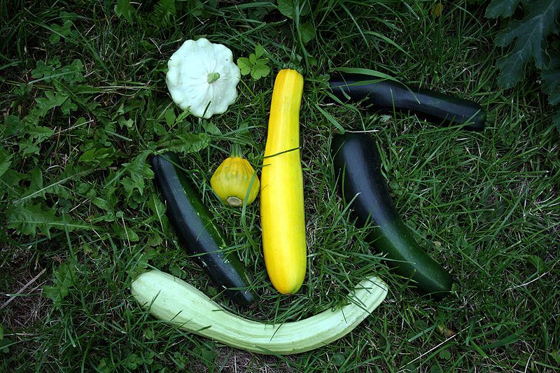 Courgette varieties have very different appearances. © DR