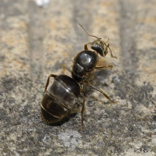 A myrmecologist studies ants. © stef_dit_patoc, Flickr CC by nc-sa 2.0